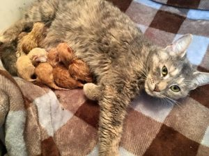 Roice-Hurst mamma and kittens