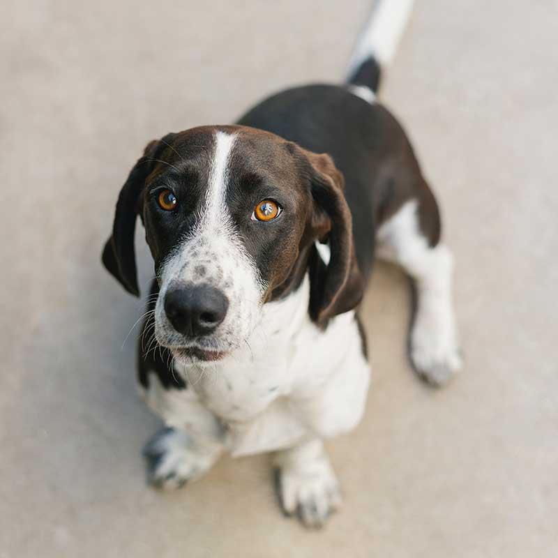 Roice-Hurst dog