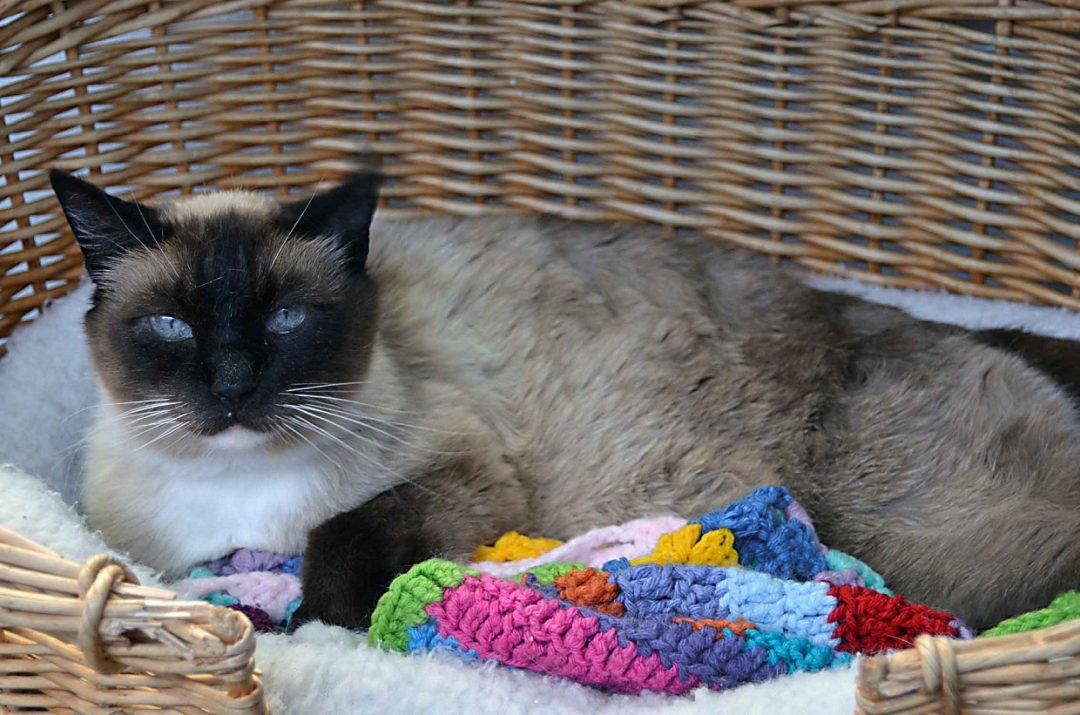 Roice-Hurst cat
