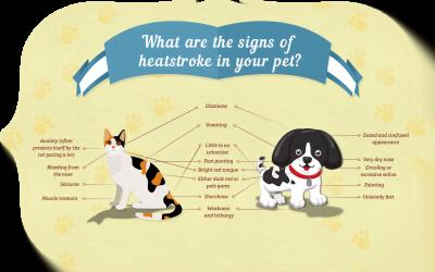 Heatstroke in Pets