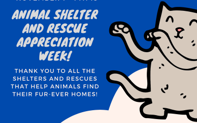 Animal Shelter and Rescue Appreciation Week