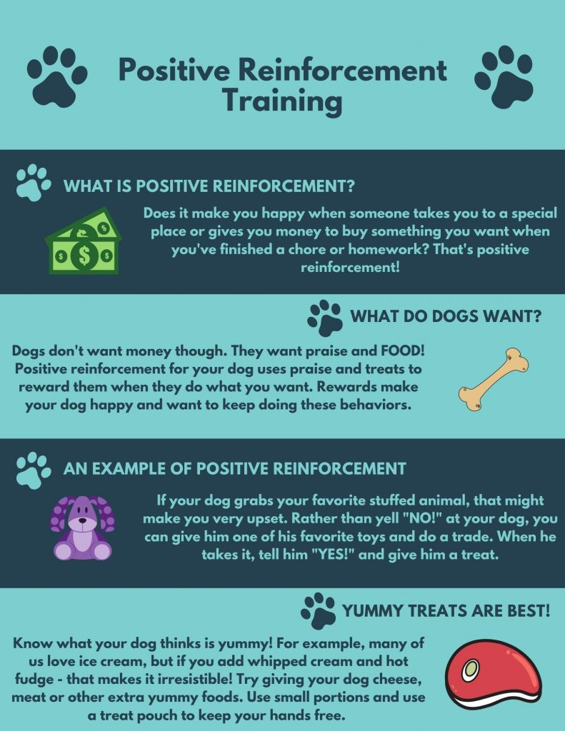 Positive Reinforcement For Dogs