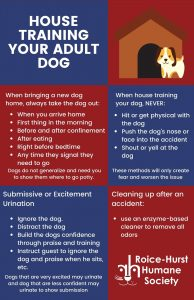 House Training Your Adult Dog