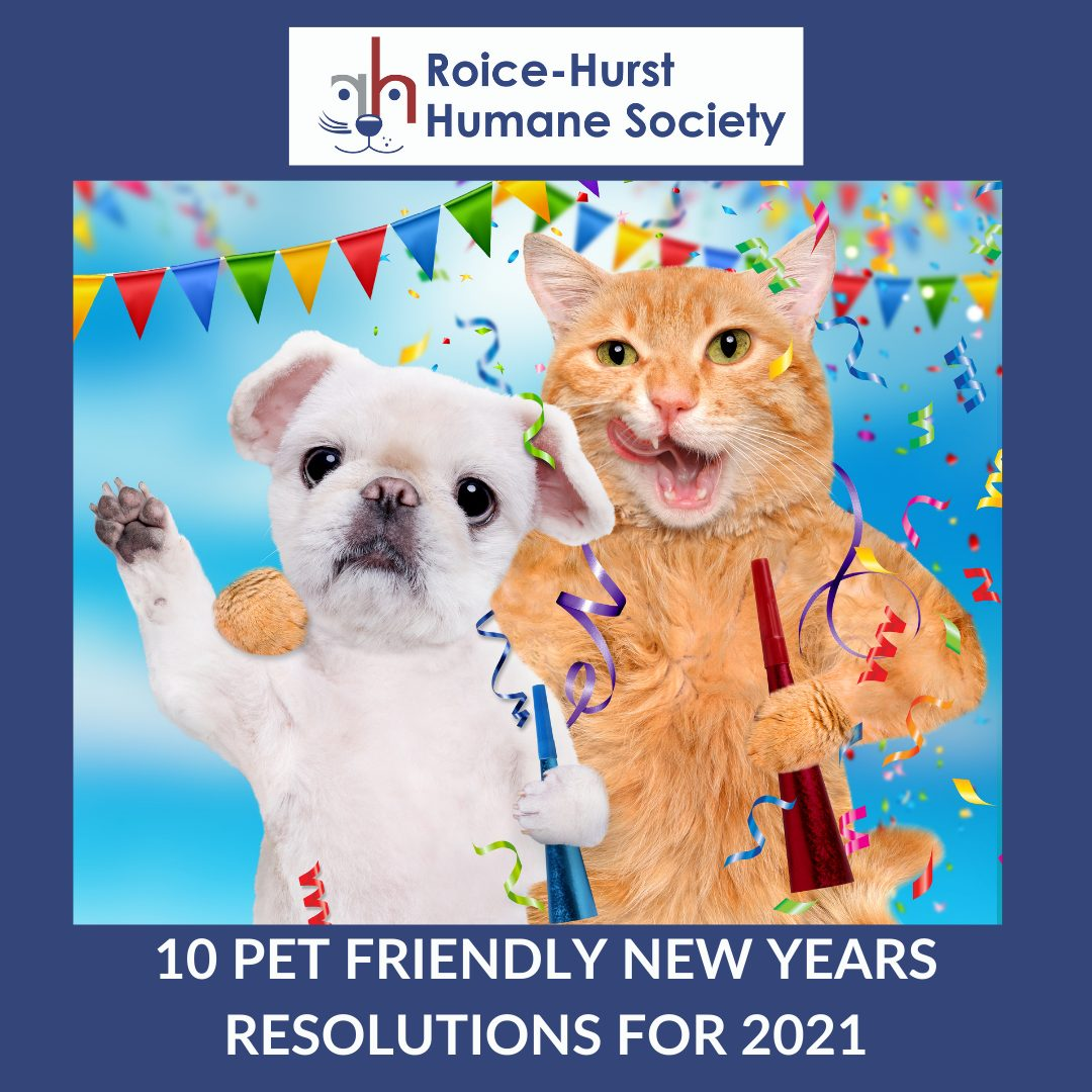 10 Pet Friendly New Year's Resolutions