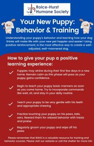 Puppy Behavior and Training