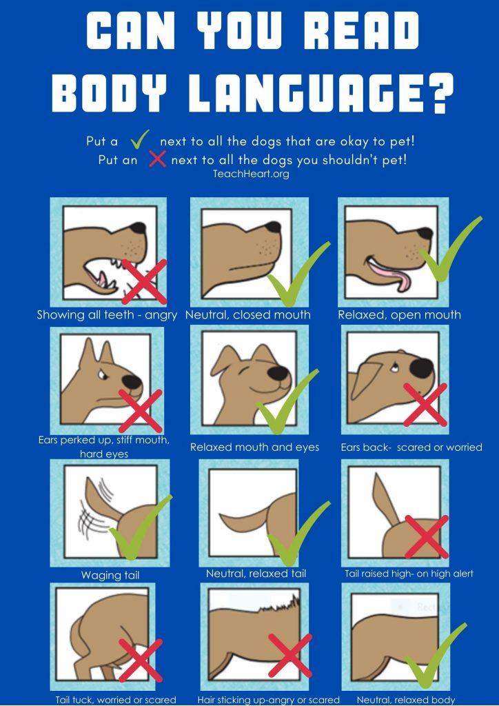 Answer Key Reading Dog Body Language