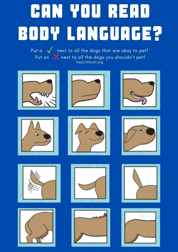 Can you Read Dog Body Language