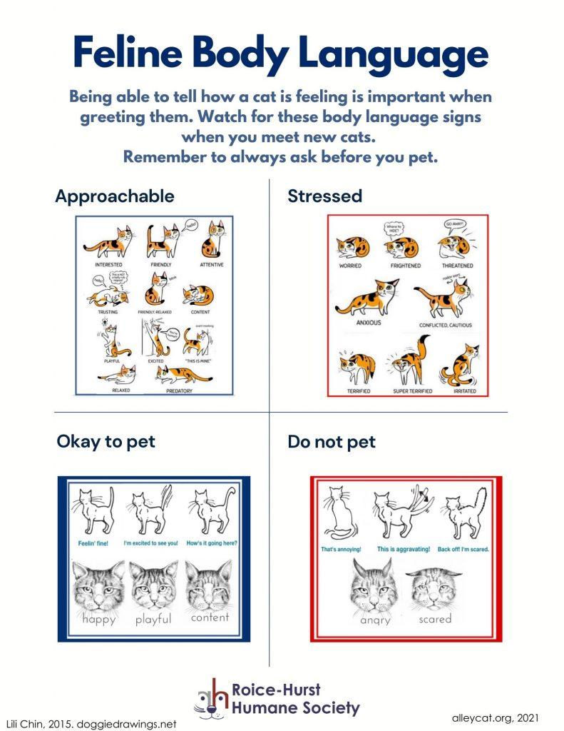 Feline Body Language