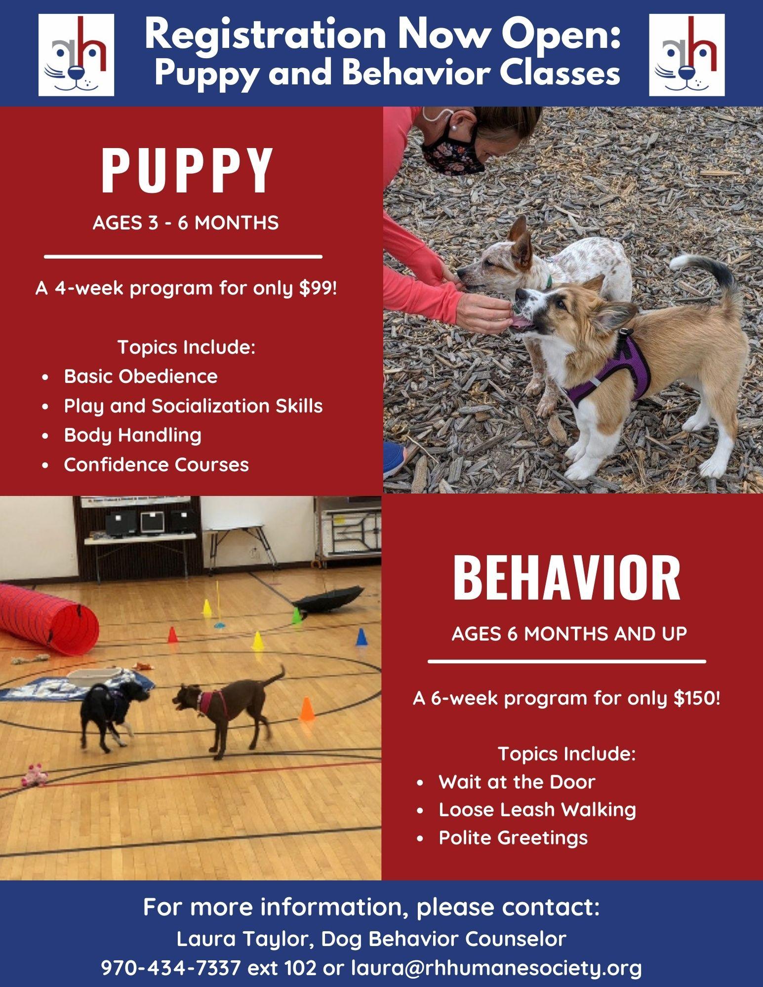 Puppy and Dog Behavior Classes