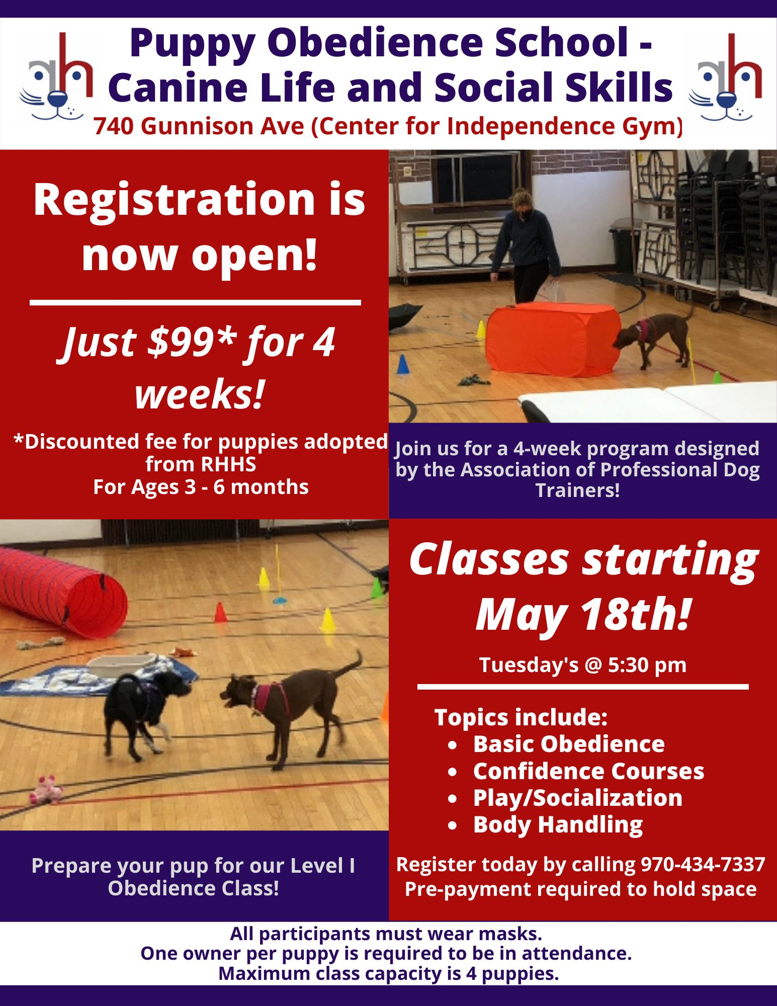 Puppy Obedience School – Canine Life and Social Skills