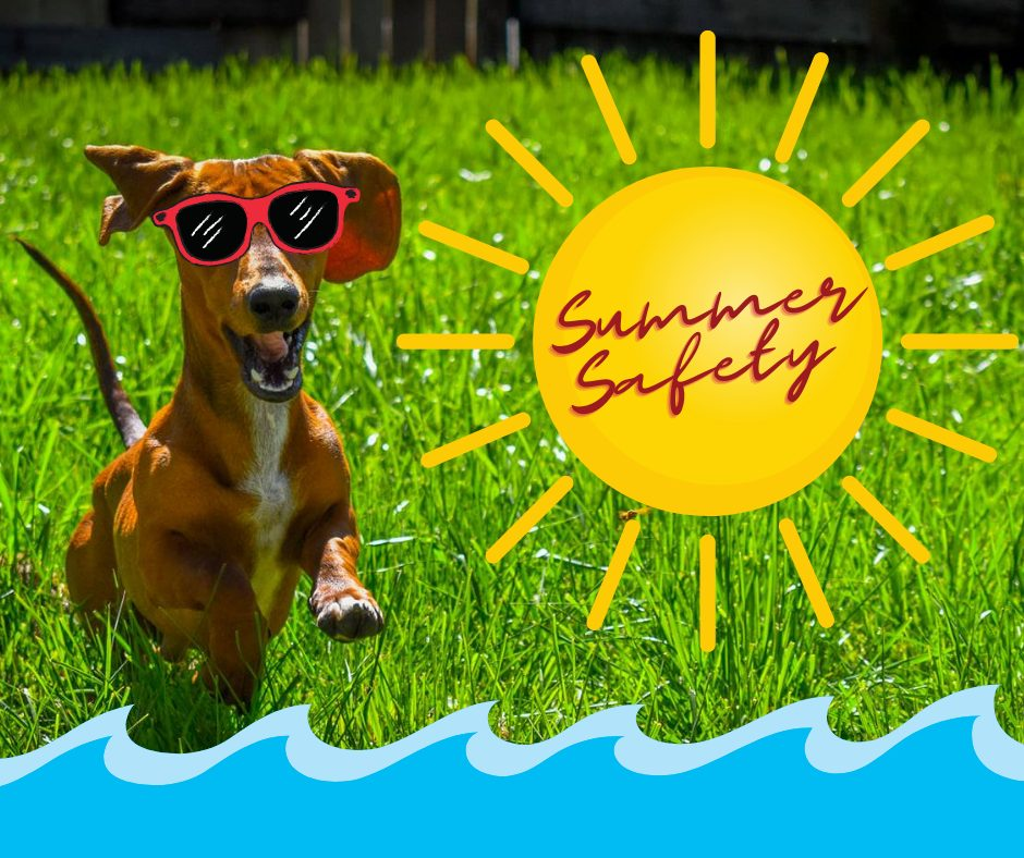 7 Summertime Safety Tips for Dogs