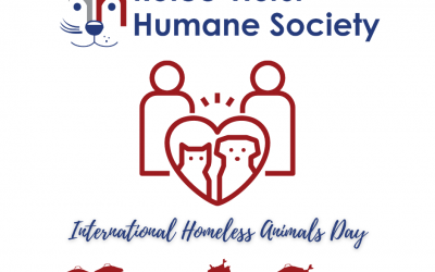 International Homeless Animals Day: Be a Part of the Solution