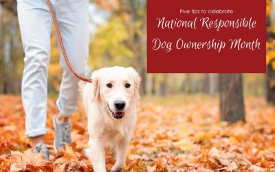 5 Tips to Celebrate Responsible Dog Ownership Month