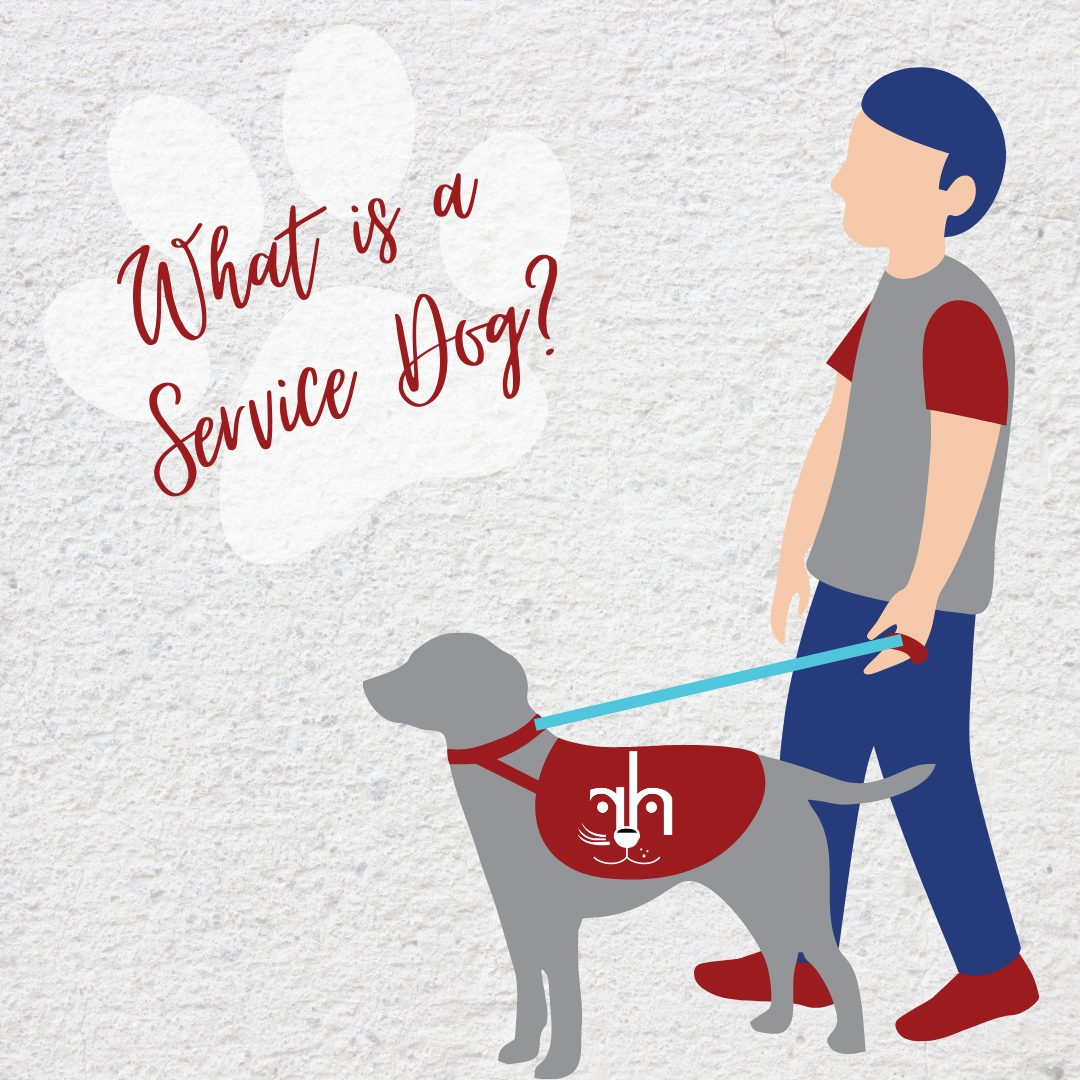 What is the difference between a service dog and an emotional support dog?